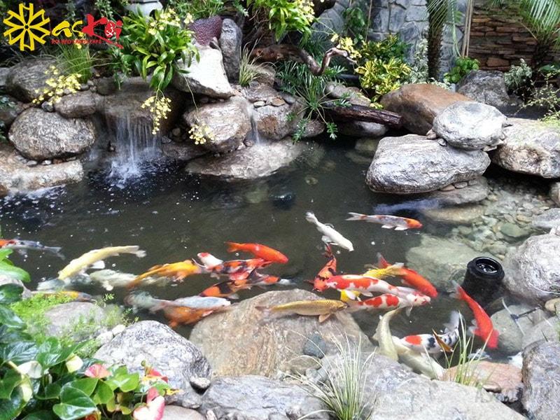 Làm hồ cá cảnh trên sân thượng cần chú ý về diện tích và khả năng chịu lực của sân thượng