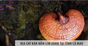 Địa chỉ bán nấm lim xanh tại tỉnh Cà Mau uy tín số 1 hiện nay