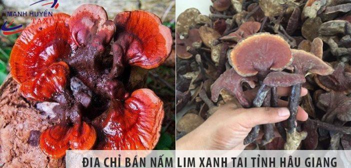 Địa chỉ bán nấm lim xanh uy tín số 1 tại tỉnh Hậu Giang